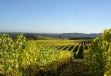 Dealu Mare, patria vinurilor rosii